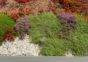 Raycap landscape design and green roof